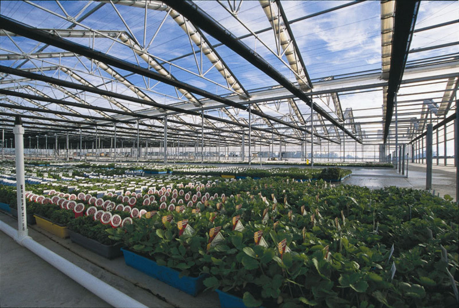 Why You Should Use Laserlite Polycarbonate Sheets For Your Greenhouse Alsynite One Nz Ltd